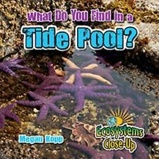 What Do You Find in a Tide Pool? by Megan Kopp (2016, Hardcover)