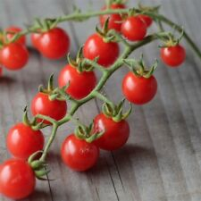 graines de tomate barbaniaka vendu en sachet de 30 graines