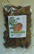 25g Catappa indian almond leaves ketapang leaf shrimp betta fish aquarium care