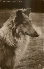 Collie Dog Close-up FAITHFUL & TRUE c1910 Real Photo Postcard