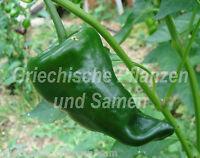 Ancho Chili der Grösste * 10 Samen * Pepperoni *aus Mexico Paprika SEHR SELTEN