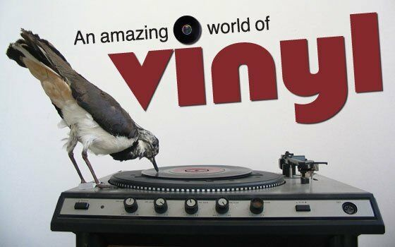 Dolomitex Vinyl And More