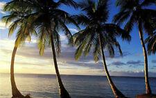 Cancun~ MOON PALACE~ VIP all inclusive vacay~ Tours~ Massage~ Mani ~Pedi ~MORE!