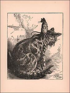 CAT & MOUSE Friend Sitting on Head by Harrison Weir, antique print 1909