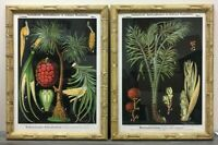 Framed Reproduction Zippel and Bollmann Botanical Wall Charts, a Pair