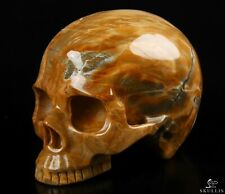 """4.6"""" PETRIFIED WOOD Carved Crystal Skull, Realistic, Crystal Healing"""