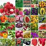Gemischt Tomatensamen Hausgarten Gemüse Obst Samen Saatgut Zuhause Garten