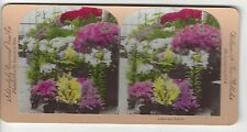 Lillies and Azalias, Universal View Co, Vintage  Stereoview
