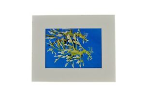 "Leafy Sea Dragon Matted Print 8""x10"""