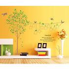 Large Tree Bird Wall Sticker Photo Frame Removable Vinyl Art Decal Mural Decor
