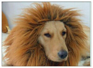 Halloween Pet Clothes  Dog Costumes Lion Mane Wig for Large Dogs Fancy Dress Up