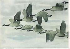 1913 Louis Agassiz Fuertes Game Birds America Color Tipped Vintage Prints Lot 6