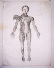 D.August Carl Bock Abbildungen der Rückenmarksnerven 7 Kupfertafeln 1827 selten