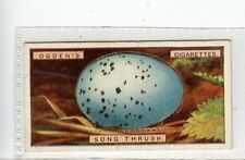 (Jc3011-100)  OGDENS,BIRDS EGGS,SONG-THRUSHS EGG,1923,#43