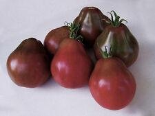 Tomatensamen BLACK TRUFFLE 10+ samen