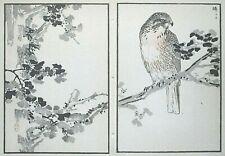 Grey-Faced Buzzard : Print Of a Japanese Woodblock Bird Print By Bairei