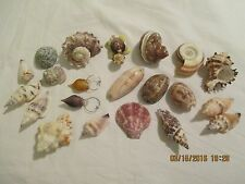 Seashells Glass Seashell Charm/Ornament & Novelty Seashell Turtle Lot of 18