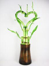 Live Heart Shape 6 Style Lucky Bamboo Plant Arrangement w/ Glass Vase Decor Gift