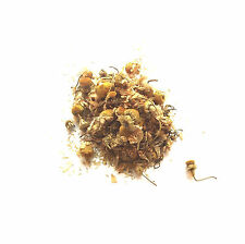 Organic Chamomile Flowers, Soil Association Certified, 50g