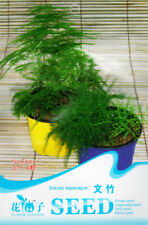 1 Pack 6 Setose Asparagus Seeds Asparagus Fern Asparagus Setaceus F009