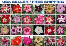 50 PC Desert Rose Seeds Mixed Colors, Rare Adenium Flower,  FREE Shipping