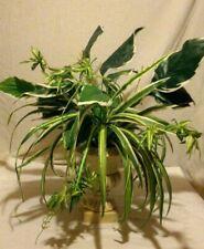 SILK PLANT w/ PLANTER URN ARTIFICIAL FAKE REALISTIC ARRANGEMENT