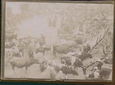 France, Marché de bétail, ca.1900, Vintage citrate print Vintage citrate print