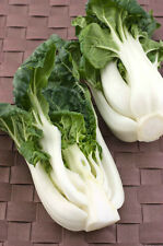 White BOK CHOY 3500 seeds  Chinese Cabbage vegetable