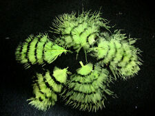 5 Pc.B Quality Lime Grizzly Turkey Marabou Fluff Feathers Mixed sizes- US Seller