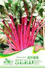 1 Pack 30 Red Leaf Lettuce Seeds Lactuca Sativa Organic C051