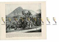 Gardens, Mt Corcovado, Rio de Janeiro, Brazil, Book Illustration (Print), 1899