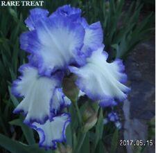 "2 ""Brother Carl & Rare Treat"" Winning Beauty Tall Bearded Iris Rhizome"