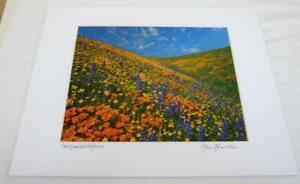 Spring Wildflowers Tehachapi CA 8x10 Photograph signed Brian Blackwelder - #98