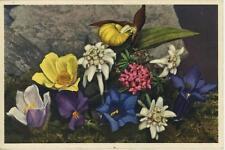 VINTAGE ALPINE FLOWERS GENTIAN EDELWEISS PINK LAUREL ORCHID POSTCARD ART PRINT