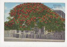 Street Scene With Poinciana In Bloom Key West Florida USA 1956 Postcard 701a