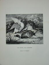Gravure CANARDS CHASSE ANIMAUX DUCKS THOMAS LANDSEER ANIMAUX 1860 HUNTING