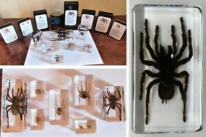 real spiders inc tarantula house etc in resin & information card on gift box