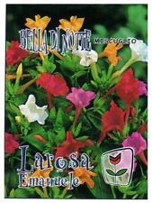 10 Semi/Seeds BELLA DI NOTTE ( Mirabilis Jalapa ) Mix