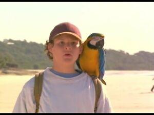 Real Macaw DVD Family Kids Bird Movie - AUSTRALIAN REGION 4 PAL RELEASE