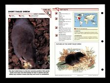 Short Tailed Shrew Wildlife Fact File Mammal Animal Card Home School Study 1.301