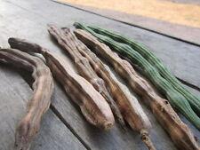 100% Original Moringa Oleifera 10 Seeds Plants Seeds,Drumstick From Thailand  +
