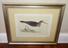 PECTORAL SANDPIPER BIRD Antique Bird Print Vintage Framed Aquatint Hand Colored