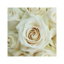 Fresh Cut Sahara Roses 100 stems / Grower Direct / Quality Guaranteed