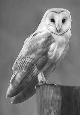 Belle barn owl poster impression photo A4