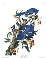 1830 John Audubon Blue Jay Corvus Cristatus Havell Edition Exc