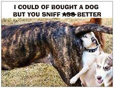 "Jail Prison Inmate Postcard ""Dirty Dog"""