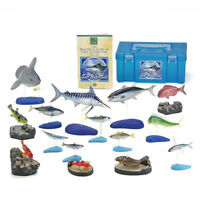 Nature's Library Salt Water Fish Real Figure Box Colorata Japan