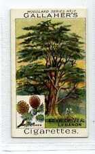 (Jc1807-100)  GALLAHERS,WOODLAND TREES,CEDAR OF LEBANON,1912#17