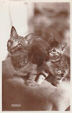 RPPC of MOTHER TABBY CAT WITH KITTEN Postcard REAL PHOTO Photograph