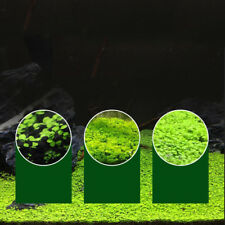 Plant Seeds Fish Tank Aquarium Aquatic Water Grass Decor Easy Grow